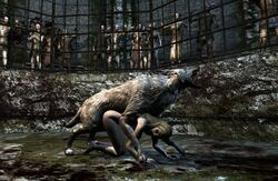skyrim tagme the_elder_scrolls wolf