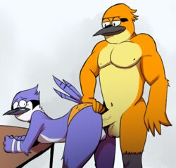 anal anal_sex anthro avian balls bird blue_jay cartoon_network chest_tuft clothing duo elfein erection feathers fur half-closed_eyes john_(regular_show) looking_back lying male mordecai nipples nude on_side open_mouth outside penetration penis regular_show sex simple_background smile tongue tuft underwear underwear_aside vein white_background yaoi