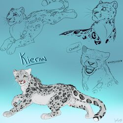 animal_genitalia animal_penis anthro ass balls erection feline feline feral fur grey_fur jazzlioness kieran leopard looking_at_viewer male mammal multiple_images penis simple_background sketch sketch_page snow_leopard solo spots white_fur
