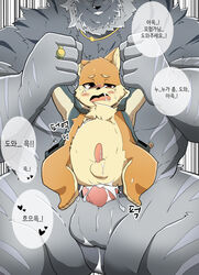 anal anal_sex big_dom_small_sub blush bottomless canine canine clothed clothing coat cum cum_inside fur grin inflation inflation jewelry kemono korean_text male male/male mammal necklace pang4746_(artist) penetration ring size_difference smile striped_fur stripes text