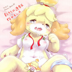 2017 animal_crossing bed bell blonde_hair blush bottomless breasts breath censored clothed clothing fallinnight female first_person_view grey_sclera hair half-closed_eyes isabelle_(animal_crossing) looking_at_viewer lying missionary_position navel nintendo nipples on_back open_mouth open_shirt panties panties_around_one_leg ribbons saliva sex shirt short_hair small_breasts solo spread_legs spreading sweat text translation_request underwear underwear_around_one_leg vest video_games white_eyes