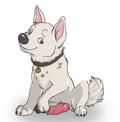 anatomically_correct animal_genitalia animal_penis bolt bolt_(film) brown_eyes canine canine_penis collar disney feral fur male mammal penis poteralos simple_background solo white_fur