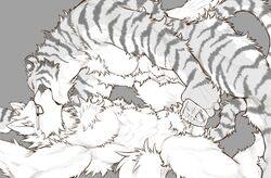 2018 abs absurd_res anthro bed biceps canine digital_media_(artwork) eyewear feline fur glasses hi_res kemono kissing male male/male mammal muscular muscular_male nude pecs simple_background sketch tiger tupidwithouts