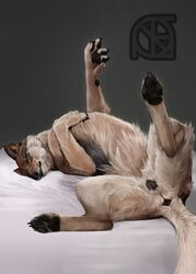 anus ass bed canine cosmiclife female feral flat_chested hi_res hindpaw lying mammal pawpads paws pinup pose presenting presenting_anus presenting_pussy pussy raised_tail semi-anthro solo spread_legs spreading teeth wolf
