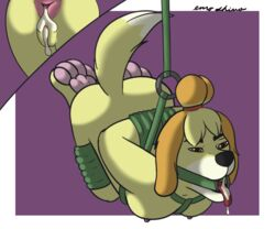anal animal_crossing anthro anus arms_behind_back bondage bound breasts canine cum cum_in_ass cum_in_mouth cum_in_pussy cum_inside enroshiva female femsub gag isabelle_(animal_crossing) mammal nintendo open_mouth_gag oral paws ring_gag suspension video_games