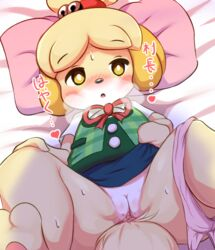 animal_crossing barefoot bed_sheet bedding blonde_hair blush blush_stickers bottomless breath canine canine clitoris clothed clothing dialogue eyebrows_visible_through_hair female hair hair_bell half-closed_eyes heart isabelle_(animal_crossing) japanese_text jingle_bell legs_up lying mammal nintendo on_back open_mouth panties panties_around_one_leg pillow presenting presenting_pussy pussy pussy_juice ratipiko ribbons shih_tzu shirt short_hair skirt solo spread_legs spreading sweat text tied_hair topknot translation_request uncensored underwear underwear_around_one_leg upskirt vest video_games yellow_eyes