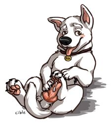 anatomically_correct anthro anus balls blush bolt bolt(character) canine collar cum disney erection feral furry gay german_shepherd heart invalid_tag knot looking_at_viewer lying male male_only masturbation no_humans nude open_mouth paw_masturbation paws penis plain_background smile solo solo_male tongue tongue_out white_background white_fur